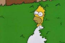 Homer in hedge.jpg